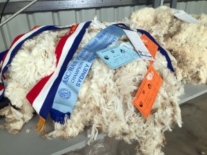champion wool exhibit-2