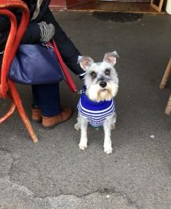 Cute dog Maldon