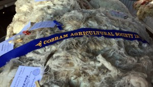 Fleece 1st prize Cobram