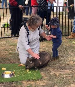 Pating the wombat