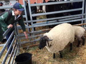 Sheep Pen Cobram